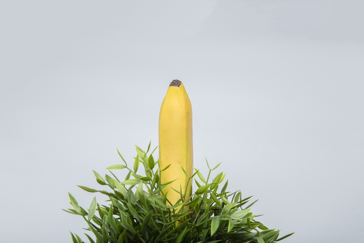 banana penis size bush