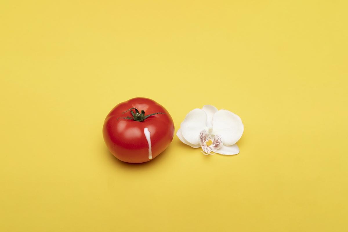 tomato flower romance free photo